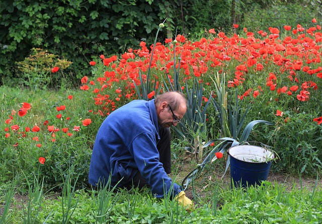 How to prepare soils in 4 steps for flowering high yield plants in spring st george news - Gardening works in october winter preparations ...