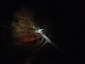 A quaking aspen caught fire after falling from an embankment and landing in power lines, milepost 12 on state Route 143, Brian Head, Utah, March 20, 2016 |Photo courtesy of Brian Head Public Safety, St. George News