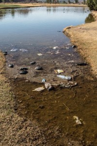 The pond where several birds and fish died Tuesday. St. George, Utah, Mar. 2, 2016 | Photo courtesy of Lynn Chamberlain, St. George News