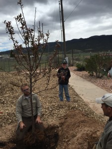 Urban Forester Daniel Allen demonstrates tree-planting techniques as Zachary Peck and Enoch City Councilman Shawn Stoor watch. Enoch, Utah, Apr. 23, 2016, | Photo courtesy of Enoch City, St. George/Cedar City News