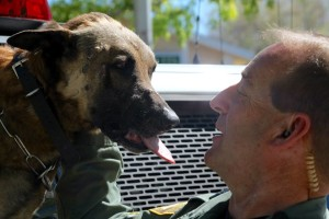 Las Vegas Police K-9 Officer Nicky, a Belgian Malinois, was shot and killed in the line of duty in Las Vegas on March 31, 2016, photo location and date unspecified | Photo courtesy of Las Vegas Metropolitan Police Department, St. George News