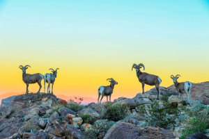Joshua Tree National Park, Share the Experience 2015 photo contest | Photo by Koustubh Kulkarni, courtesy of National Park Foundation; St. George News