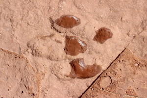 Dinosaur tracks are one of the fragile resources the BLM St. George Field Office is tasked with protecting, Warner Valley, Utah, April 10, 2016 | Photo by Don Gilman, St. George News