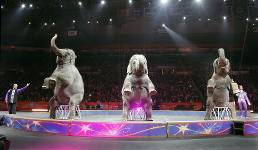 Asian elephants perform for the final time in the Ringling Bros. and Barnum & Bailey Circus, Sunday, in Providence, R.I. The circus closes its own chapter on a controversial practice that has entertained audiences since circuses began in America two centuries ago. The animals will live at the Ringling Bros. 200-acre Center for Elephant Conservation in Florida. Providence, Rhode Island, May 1, 2016 | AP Photo by Bill Sikes; St. george News