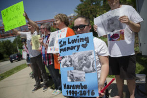Kate Villanueva of Erlanger, Kentucky, center right, holds a sign depicting the gorilla Harambe during a vigil outside the Cincinnati Zoo & Botanical Garden. Harambe was killed Saturday at the Cincinnati Zoo after a 4-year-old boy slipped into an exhibit and a special zoo response team concluded his life was in danger. Cincinnati, Ohio, May 30, 2016 | Photo by John Minchillo (AP), St. George News