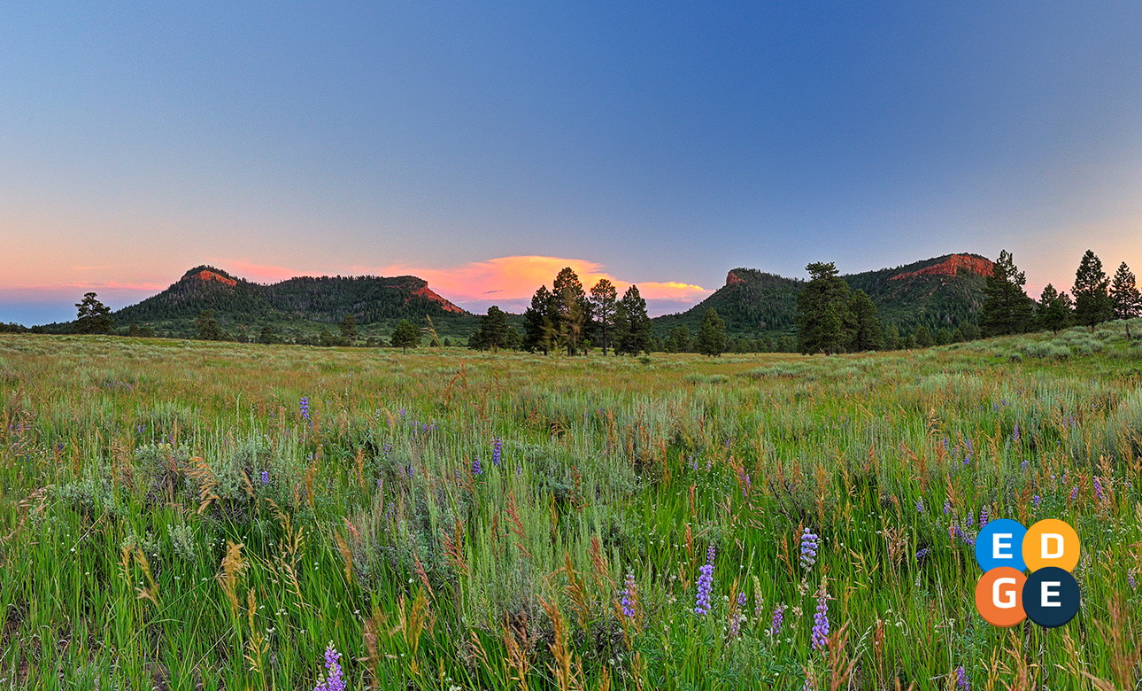 The Bears Ears Buttes framed with summer wild flowers, Bears Ears Buttes, Date not given | Photo by Tim Peterson (Bears Ears Inter-Tribal Coalition), St. George News