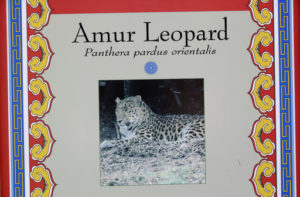 A photograph of an Amur leopard is shown at its enclosure at Utah's Hogle Zoo Tuesday, June 7, 2016, in Salt Lake City. Zoo officials say a rare Amur leopard is safe after it escaped from its enclosure and was tranquilized by staff. Hogle Zoo spokeswoman Erica Hansen says the 4-year-old female leopard was found Tuesday morning by zoo visitors after it escaped. (AP Photo/Rick Bowmer)