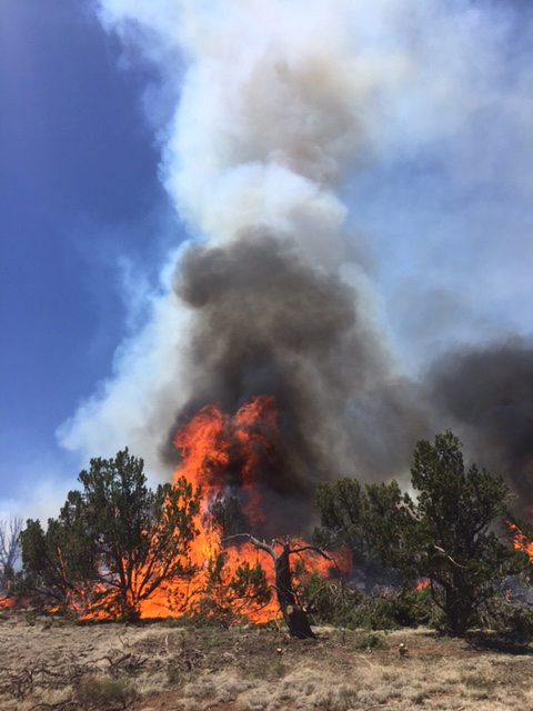 The Bert fire in the Kaibab National Forest has reached 2,175 acres in size, Williams, Arizona, June 2016 | Photo courtesy U.S. Forest Service, St. George News
