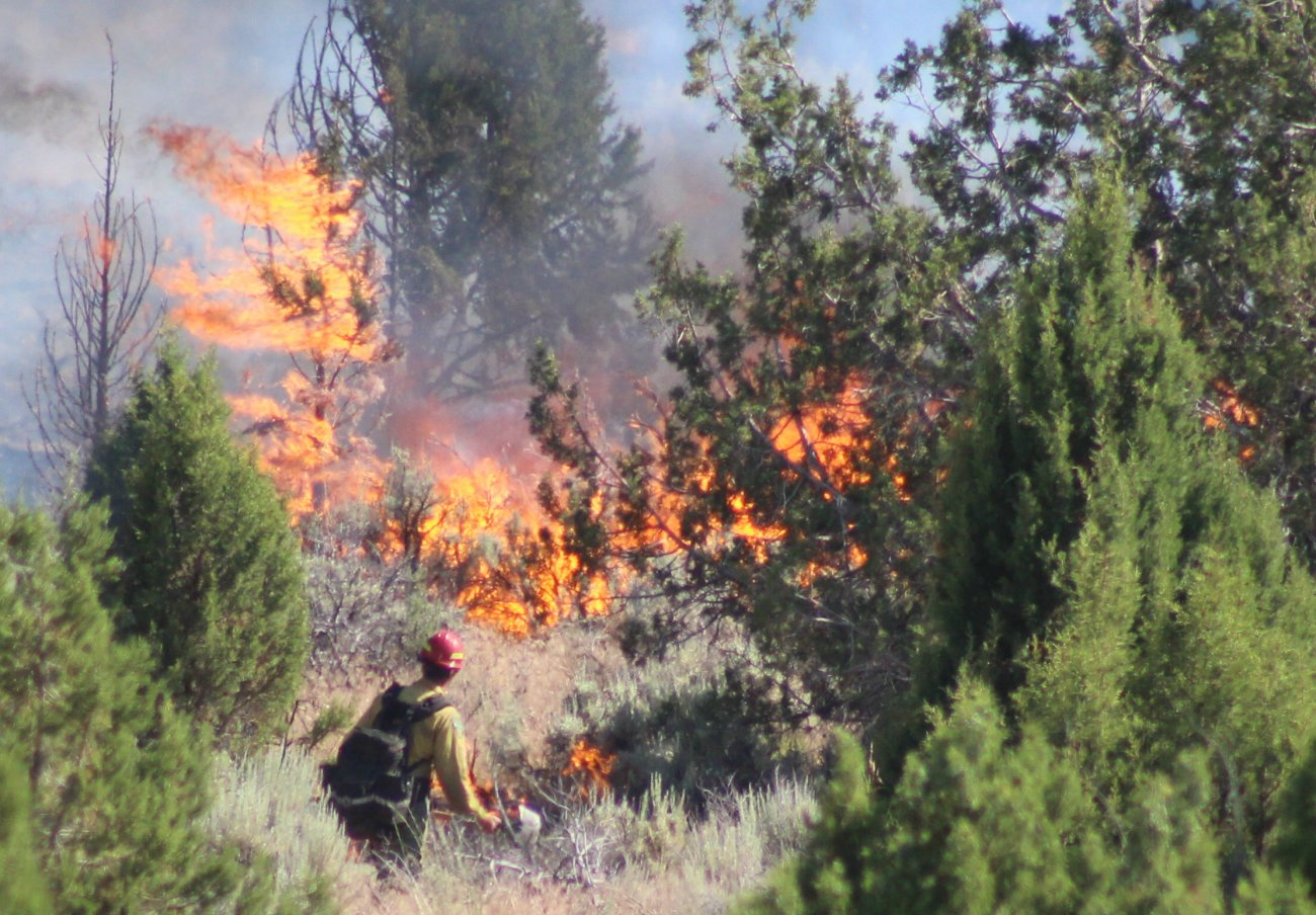 Firefighters from multiple agencies responded to the Spring Hollow Fire in the Dixie National Forest, Washington County, Utah, June 23, 2016 | Photo by Mori Kessler, St. George News