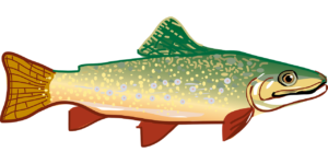 rainbow trout-294469_1280