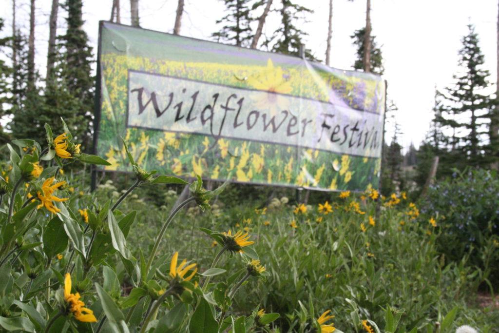Cedar Breaks National Monument hosts the 2016 Annual Wildflower Festival, Cedar City, Utah, July 2016 | Photo by Kaleigh Bronson, St. George News / Cedar City News