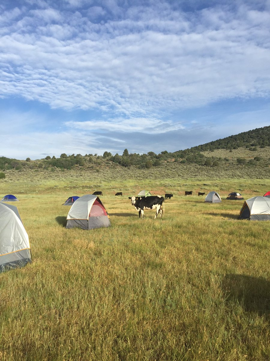 A Thursday night thunderstorm at the Saddle Fire base camp got tents wet. Cattle quickly moved in Friday morning to lick the tents, Washington County, Utah, July 1, 2016 | Photo courtesy of NIMO, St. George News