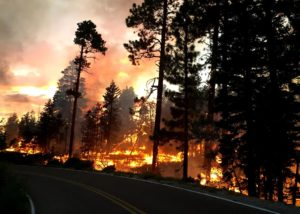 Fire burns along Cape Royal Road during nighttime burnout operations on the Fuller Fire on July 17, 2016 | Photo courtesy of Grand Canyon NPS, St. George News