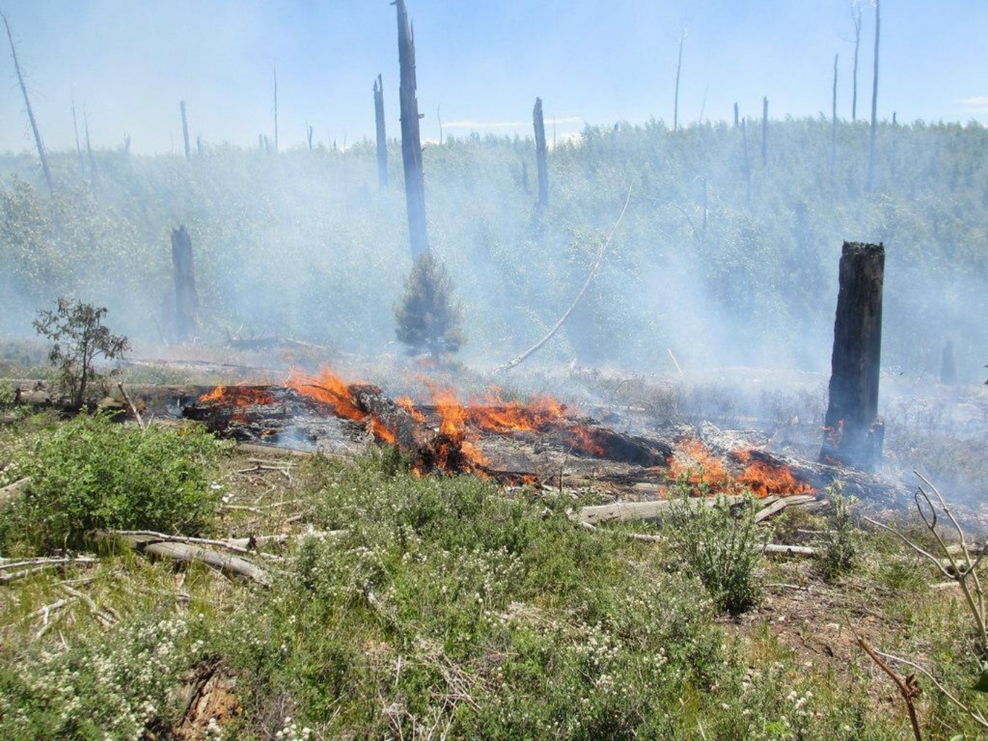 Active burning in dead and down forest litter (fuel), North Rim, Grand Canyon, Arizona, July 11, 2016 | Photo courtesy of the National Park Service via Inciweb, St. George News