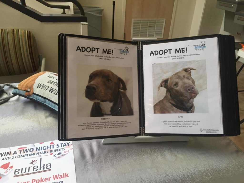 """Photos of adoptable pets from the Ivins Animal Shelter are displayed during """"Mutts and Music"""" at Tuacahn Center for the Arts, Ivins, Utah, August 13, 2016   Photo by Hollie Reina, St. George News"""