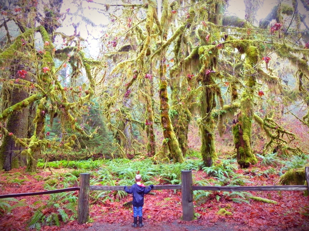 Ike Green admires the Hall of Moss in Olympic National Park, Washington, date unspecified   Photo courtesy Chris Green, St. George News
