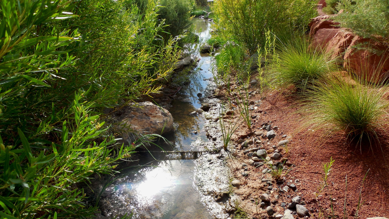 Biologists began capturing native fish and draining the stream at Red Hills Desert Garden Monday morning, St. George, Utah, Aug. 22, 2016 | Photo by Julie Applegate, St. George News