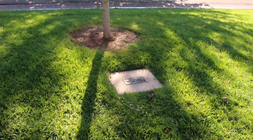 A plaque commemorating murder victim Keely Amber Hall was placed in Dixie Downs Park in March 2015. St. George City officials also planted a tree nearby in Hall's memory, St. George, Utah, Aug. 29, 2016 | Photo by Mike Cole, St. George News