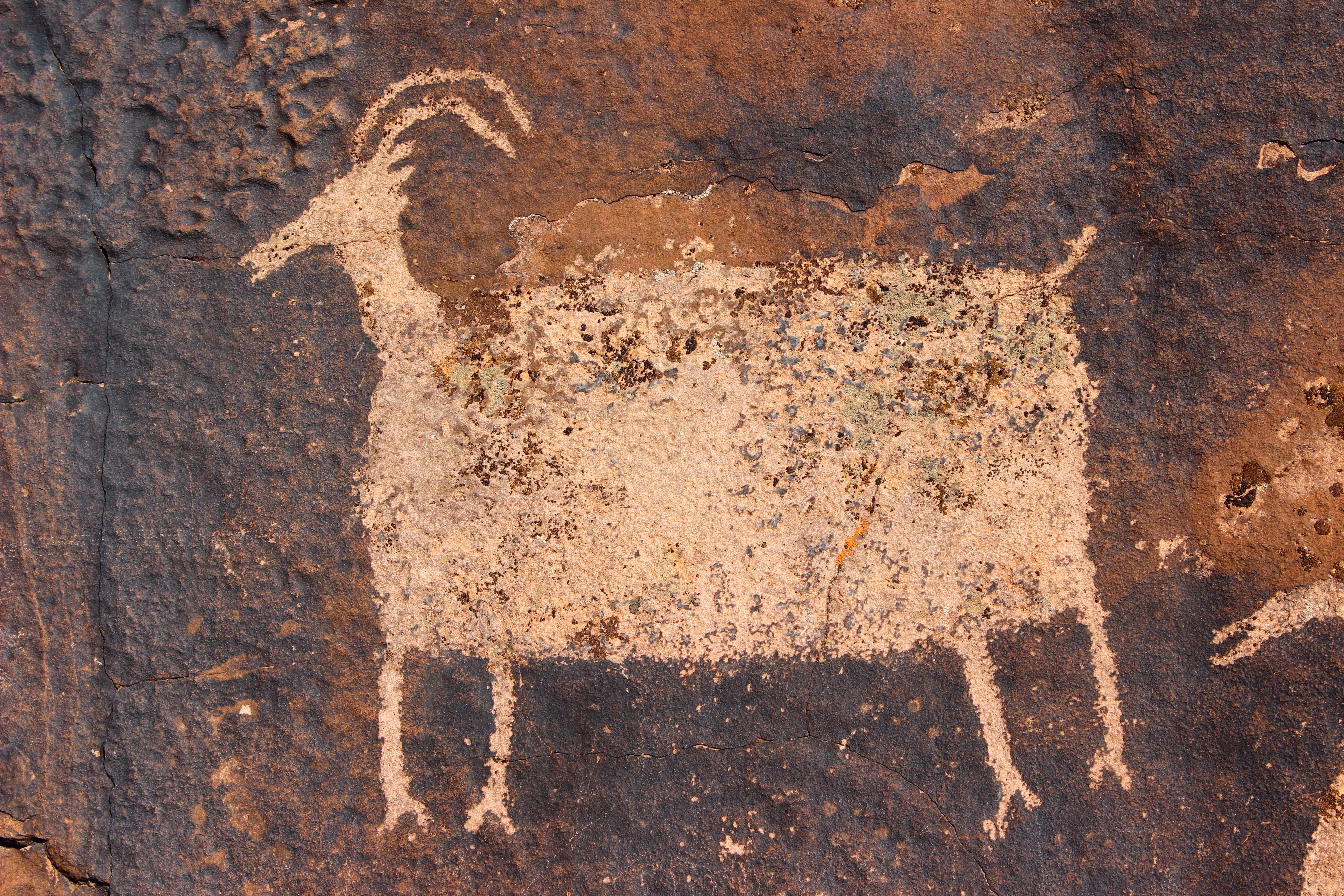 According to the Utah Division of Wildlife Resources, petroglyph and pictograph depictions of Bighorn Sheep are the most common wildlife portrayed at archaeological sites | Photo by Don Gilman, St. George News
