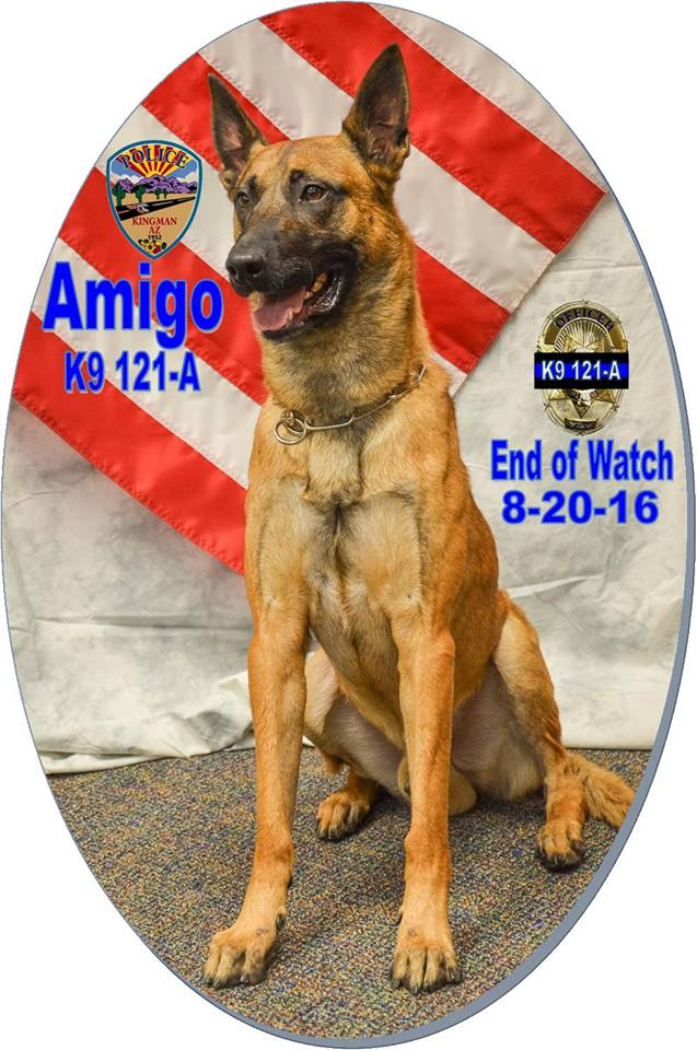 Police K-9 Officer Amigo, photo location and date unspecified | Photo courtesy of Kingman Police Department, St. George News