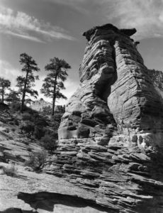 Ponderosas' Guardian by Michael Plyer | Photo courtesy of Frontier Homestead State Park, St. George News, Cedar City News
