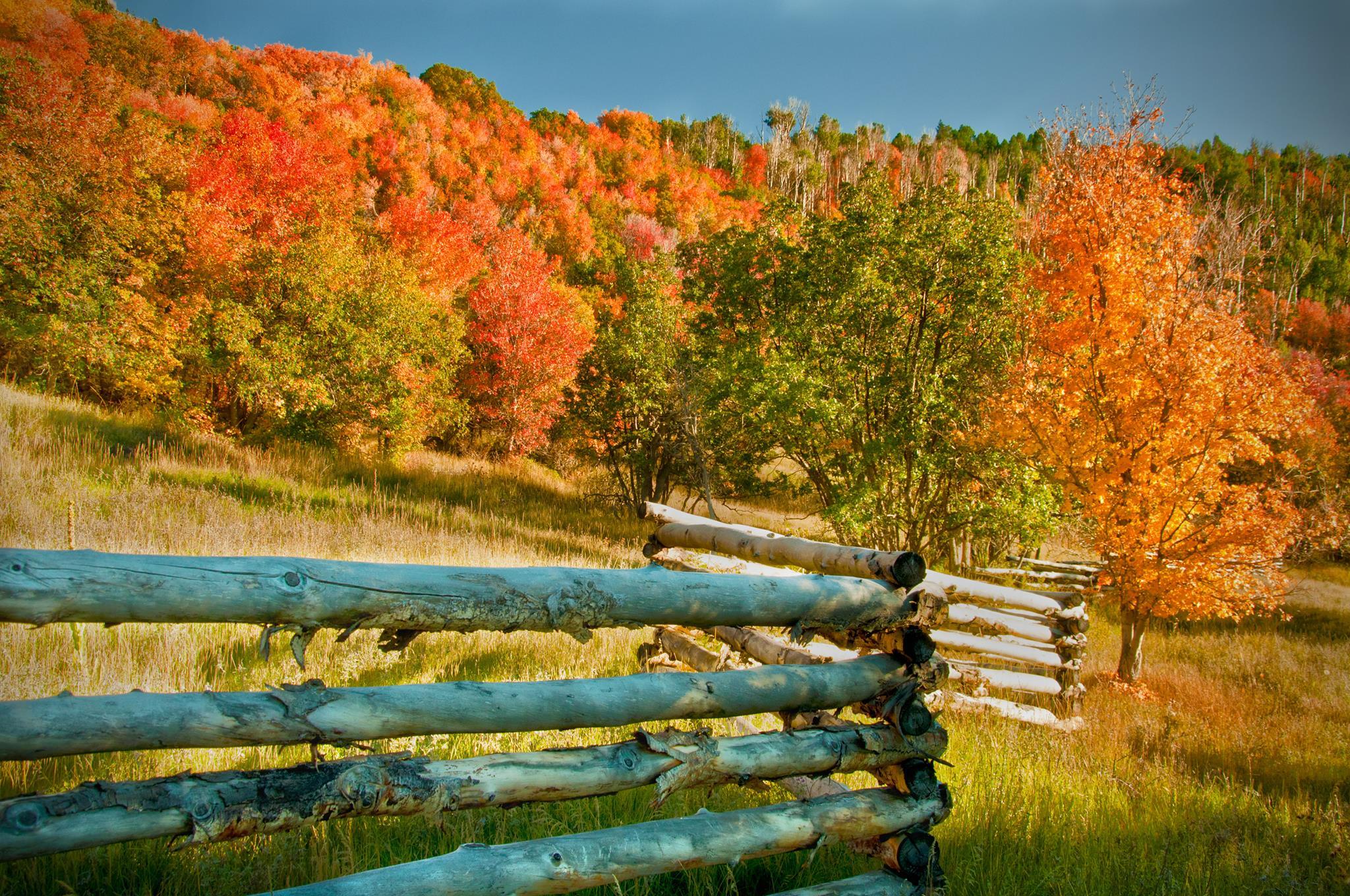 Vibrant hues up Cedar Canyon, Utah, date unspecified| photo courtesy of Sam El Halta, St. George News