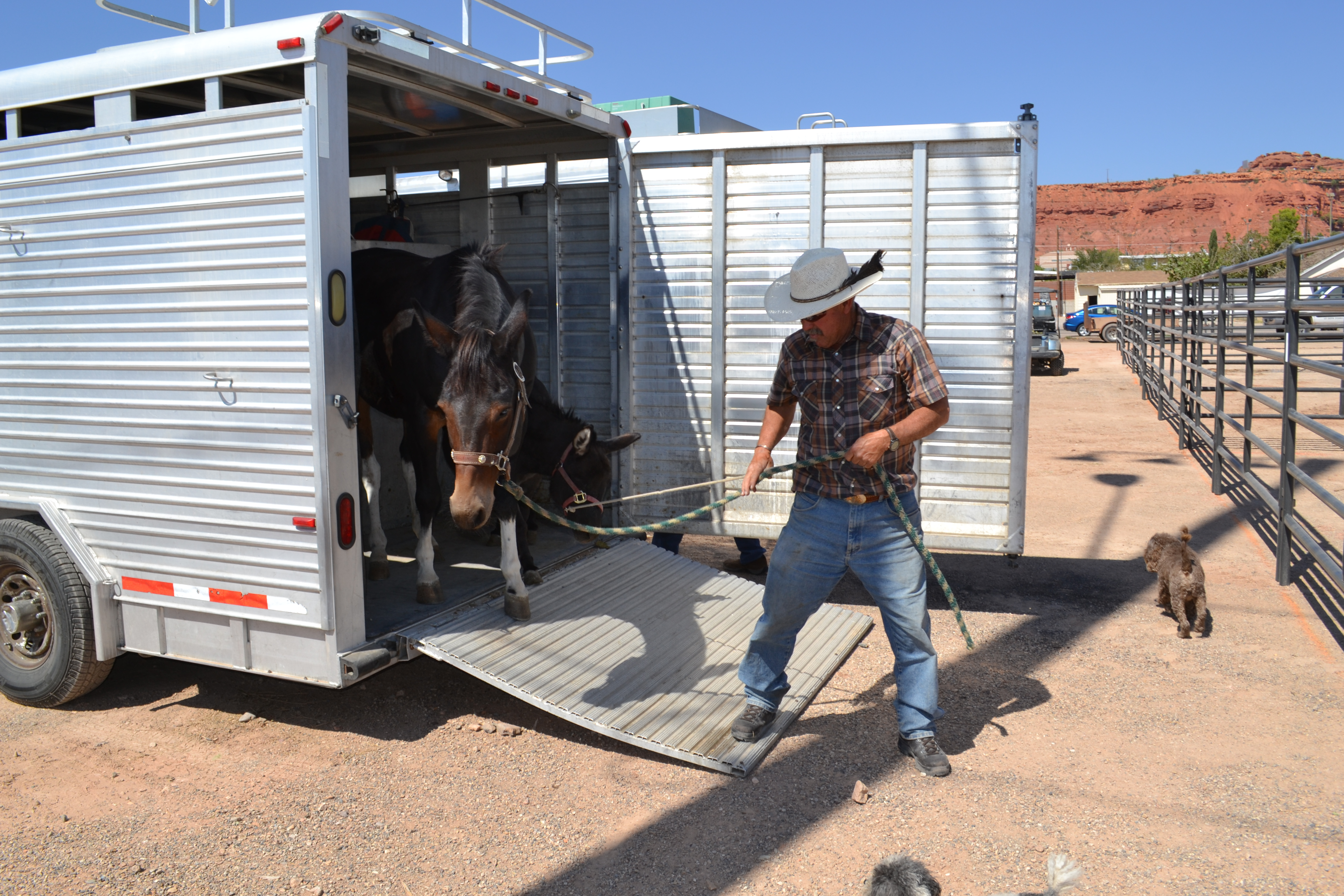 Randee Munns was the first arrival to unload stock at the Dixie Sunbowl ahead of the weekend's Dixie Roundup Rodeo, St. George, Utah, Sept. 12, 2016 | Photo by Joseph Witham, St George News