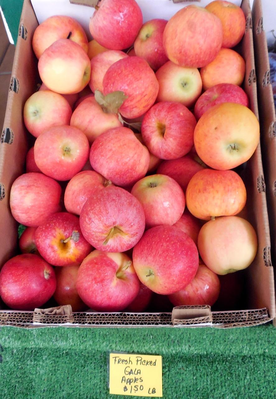 Early season apples at Frei's Fruit Market, Santa Clara, Utah, Sept. 1, 2016 | Photo by Julie Applegate, St. George News