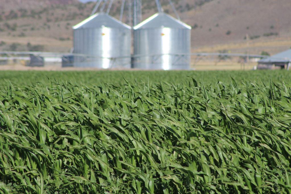 Iron County farms - corn - silo
