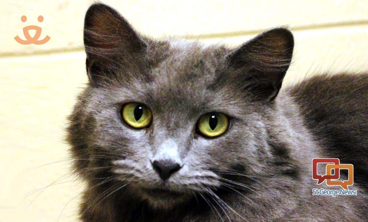 Cat Adoption St George Utah