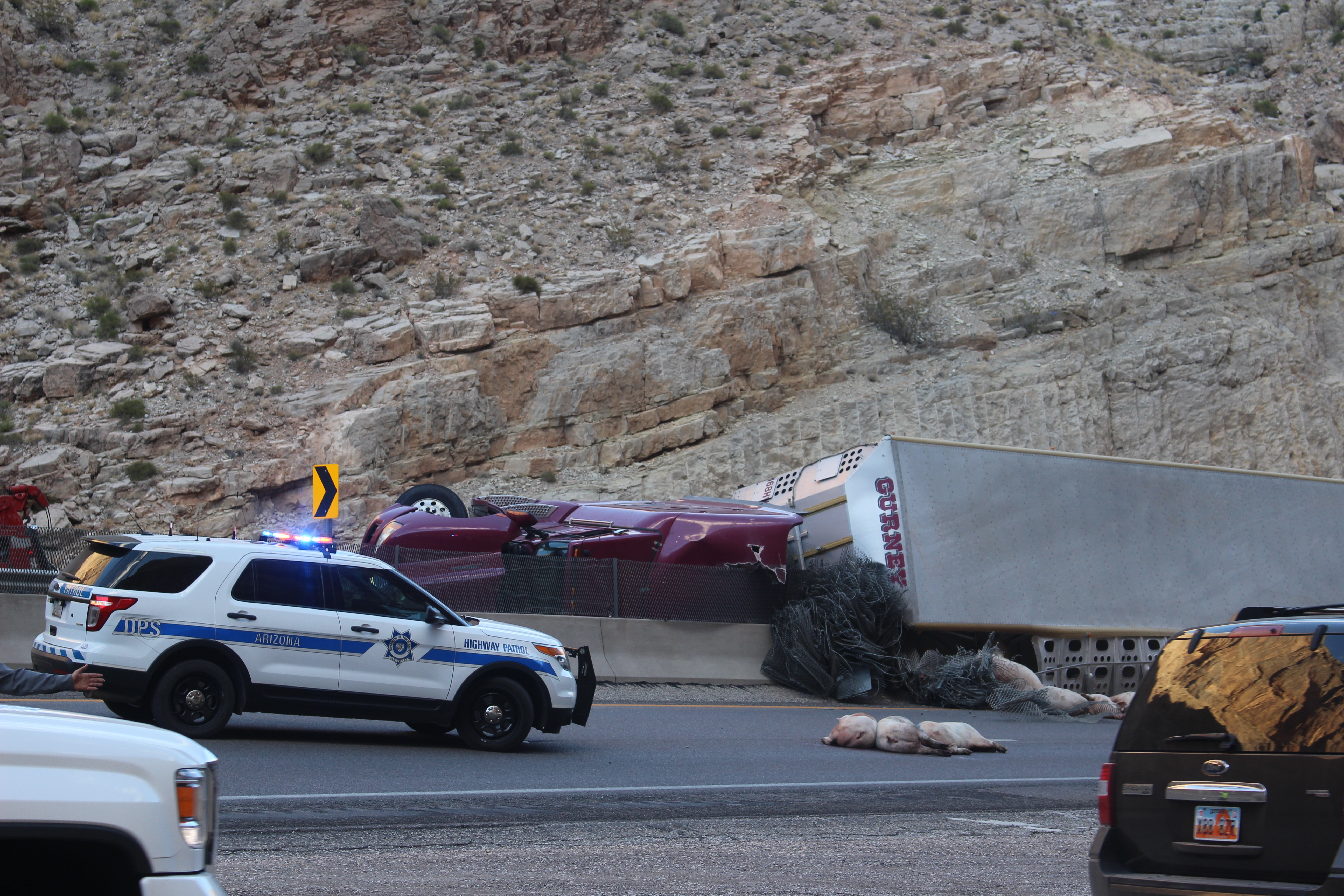 Emergency crews and volunteer ranchers clean up after a semi hauling pigs overturns in Interstate 15, Mojave County, Arizona, Oct. 17, 2016 | Photo by Joseph Witham, St. George News