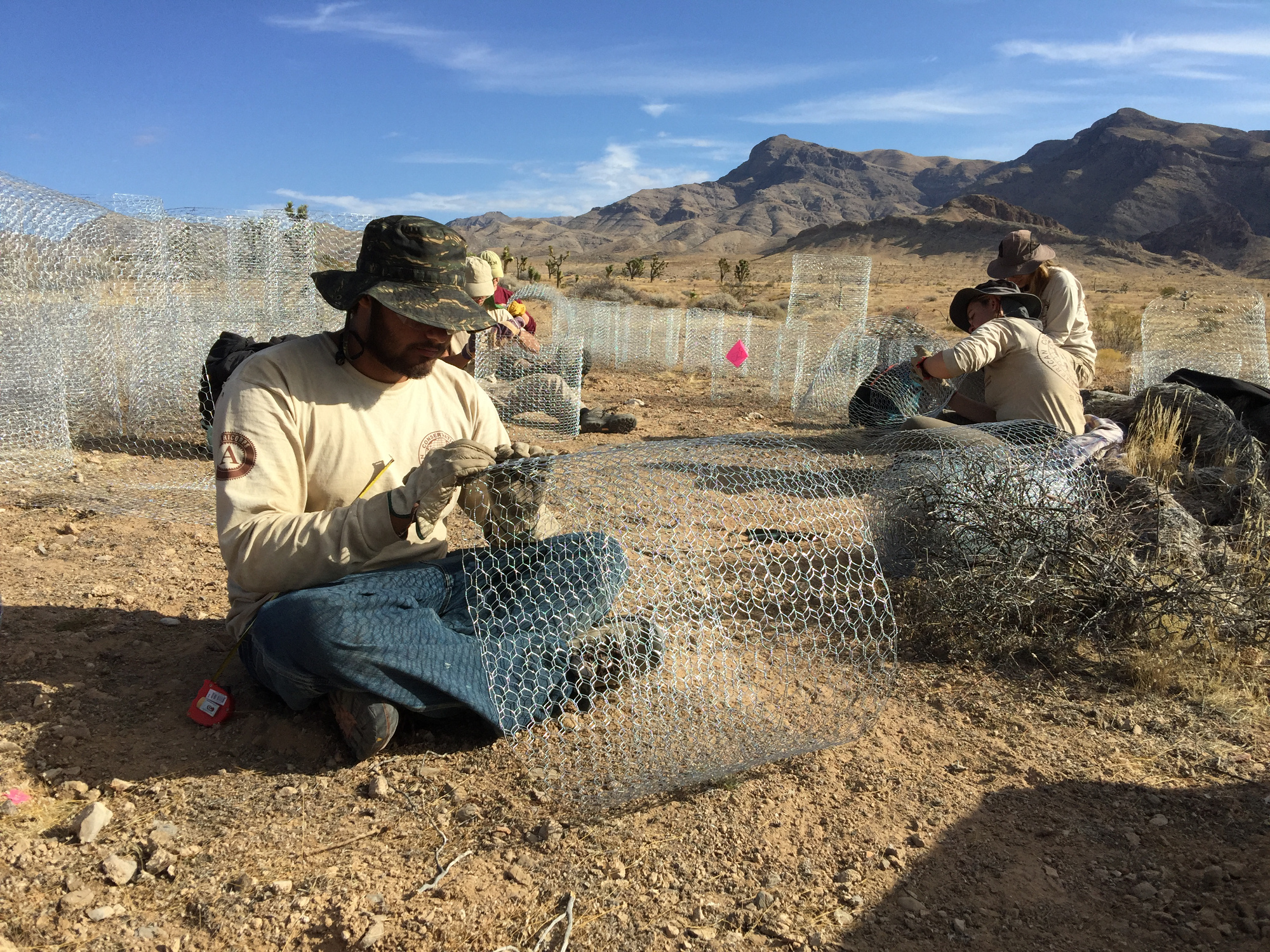 AmeriCorps volunteers construct wire mesh cages to protect new plants, part of a desert tortoise habitat improvement experiment underway in the Beaver Dam Wash National Conservation Area, Washington County, Utah, Nov. 4, 2016 | Photo by Christian Venhuizen, courtesy of the Bureau of Land Management, St. George News