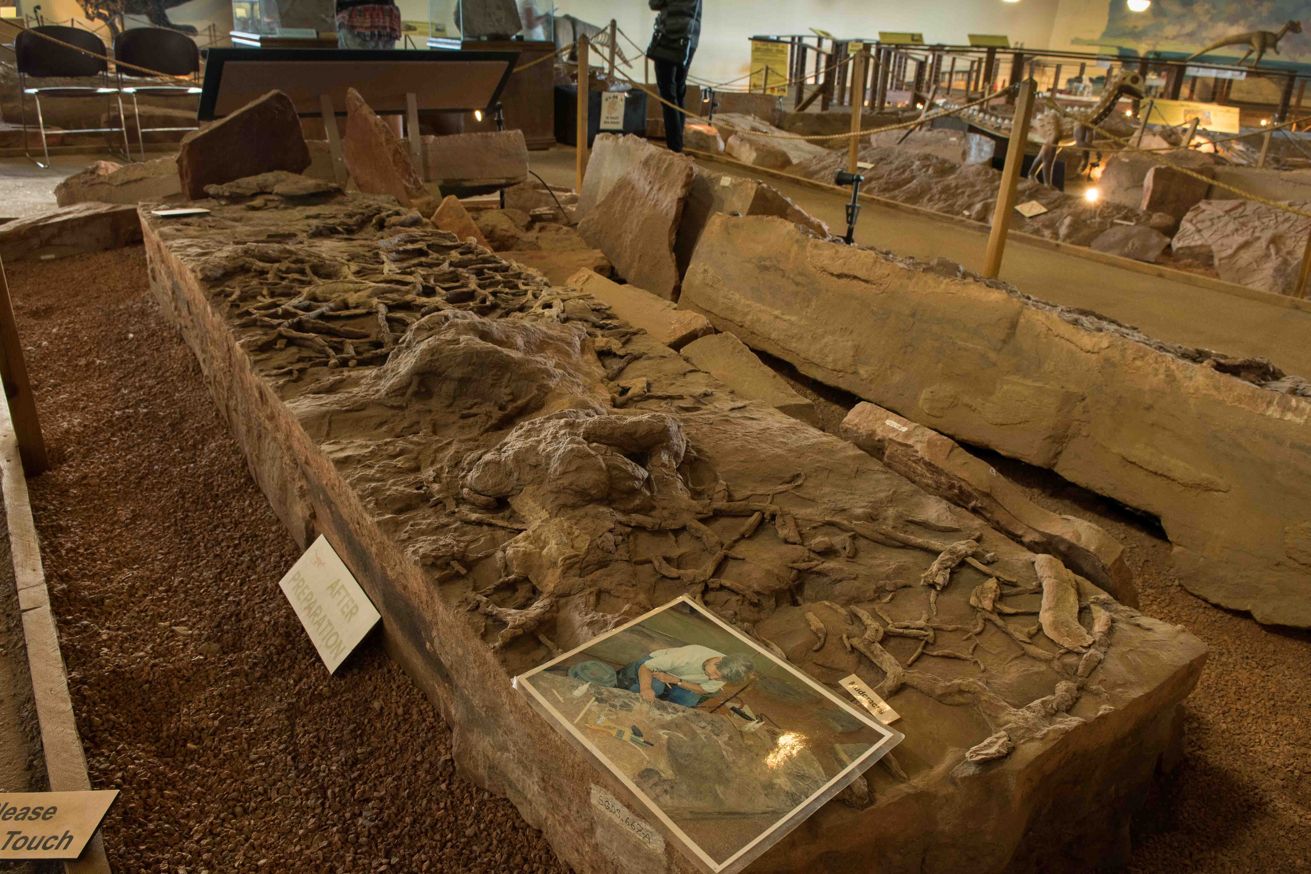 Slabs of dinosaur tracks prepped by volunteer. Photo in lower corner of slab shows work being done on slab prior to uncovering prints, Dinosaur Discovery Site, St. George, Utah, Oct. 31, 2016 | Photo by Jim Lillywhite, St. George News