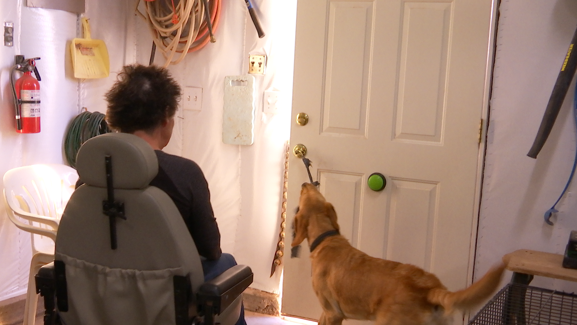 Cathy Powell instructs Katie the service dog to open the door, Loving Angel Service Dogs, St. George, Utah, Dec. 11, 2016 | Photo by Austin Peck, St. George News