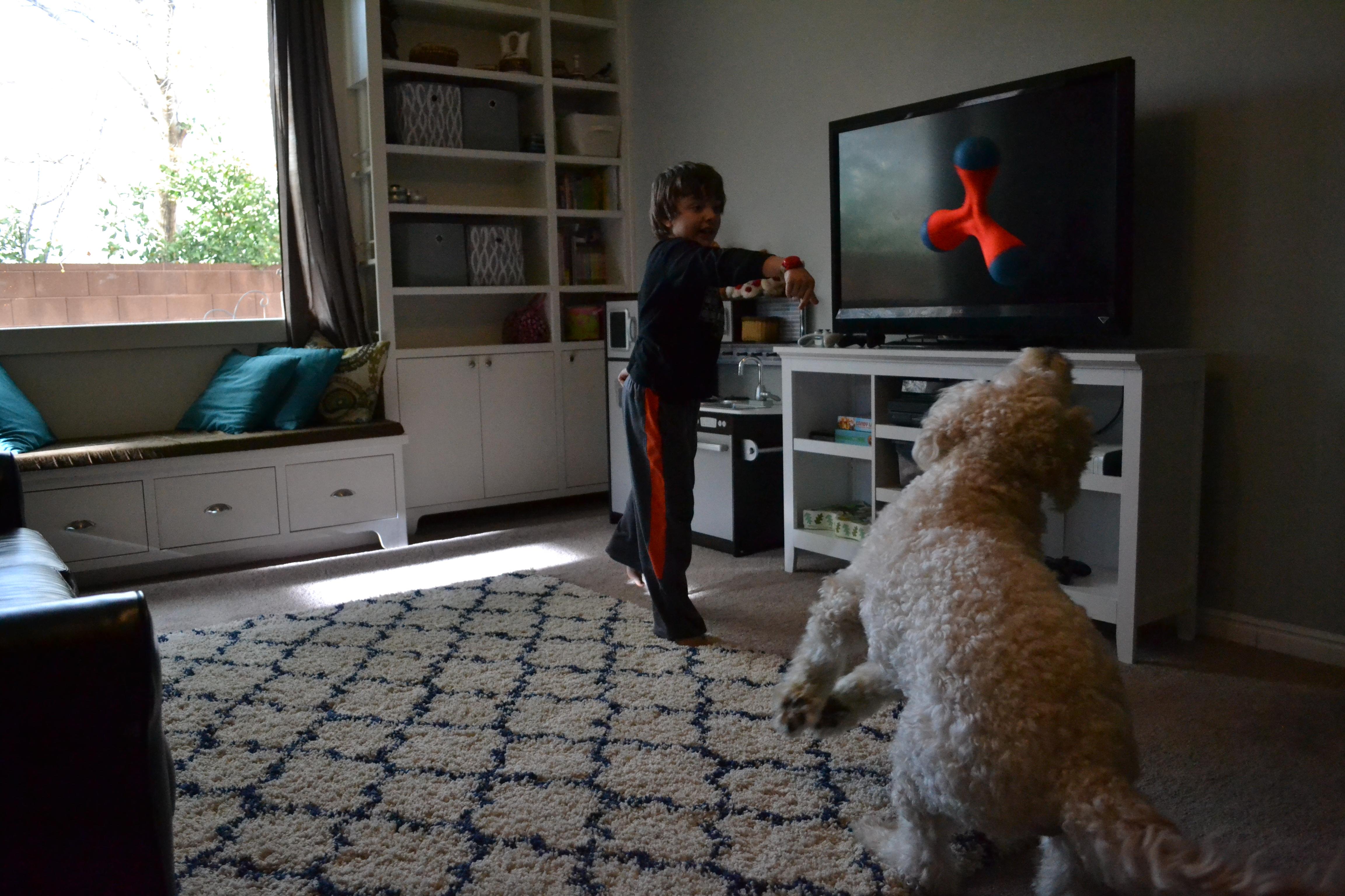 J.J. the service dog plays with Lucien Tucker, Washington, Utah, Dec. 16, 2016 | Photo by Joseph Witham, St. George News