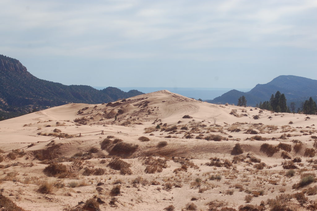 Mounds of coral-colored sand shape the landscape of Coral Pink Sand Dunes State Park, Utah, Nov. 26, 2016 | Photo by Hollie Reina, St. George News