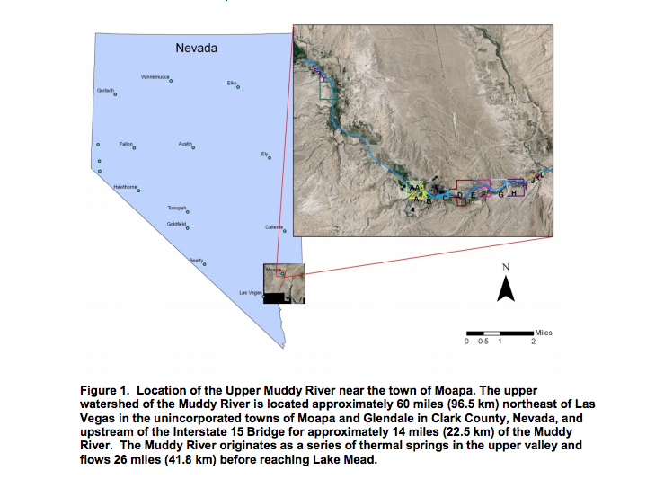 Figure showing the location of the upper Muddy River in Clark County, Nevada. This figure is included in the Final Report to the Clark County's Desert Conservation Program Contract 2005-TNC-572-P by Tanya Anderson and Louis Provencher, The Nature Conservancy. | Image courtesy of Clark County, Nevada, St. George News