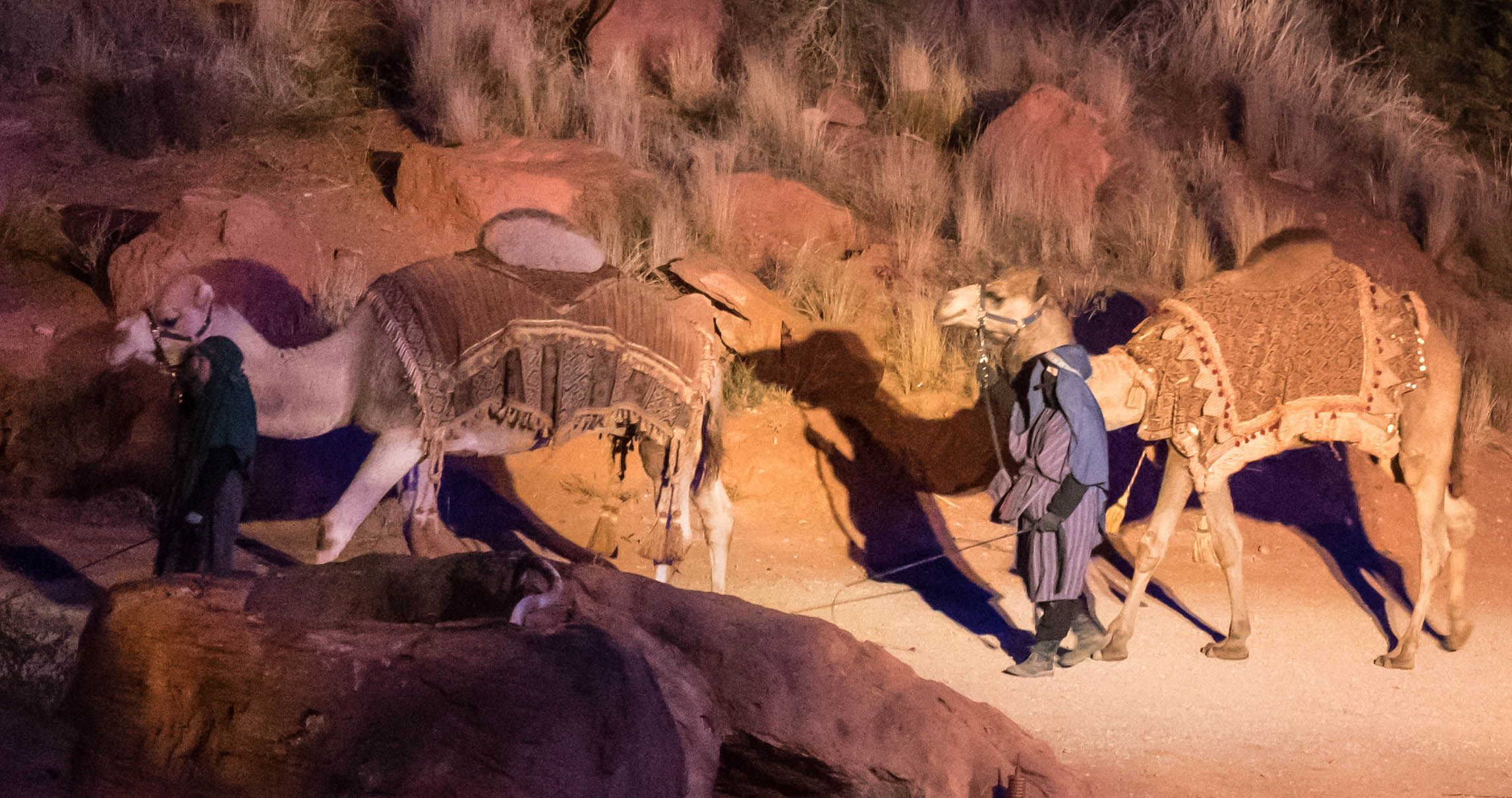 Wise men arriving with camels. Ivins, Utah, Dec. 5, 2016   Photo courtesy of Jim Lillywhite, St. George News