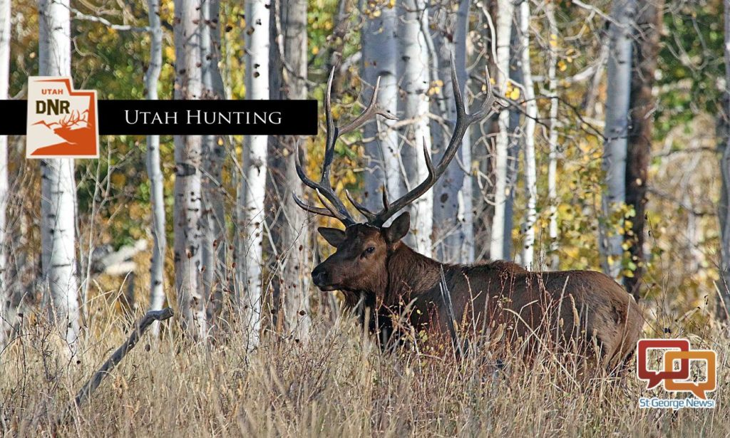 Big game hunting permits for fall application period for Utah fishing license cost 2017