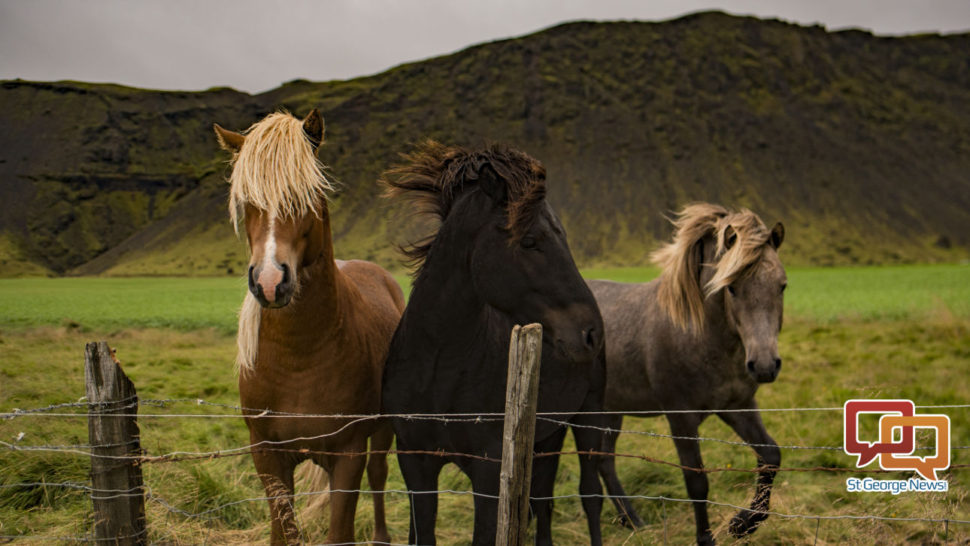 Arrests Made After 3 Horses Found Dead On New Harmony