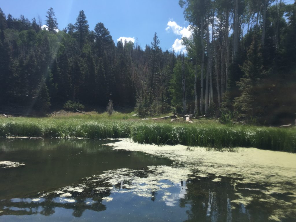 Explore high altitude fun at tushar lakeside campground st george views of tushar lakeside campground just east of beaver utah july 15 2017 photo by hollie reina st george news publicscrutiny Image collections