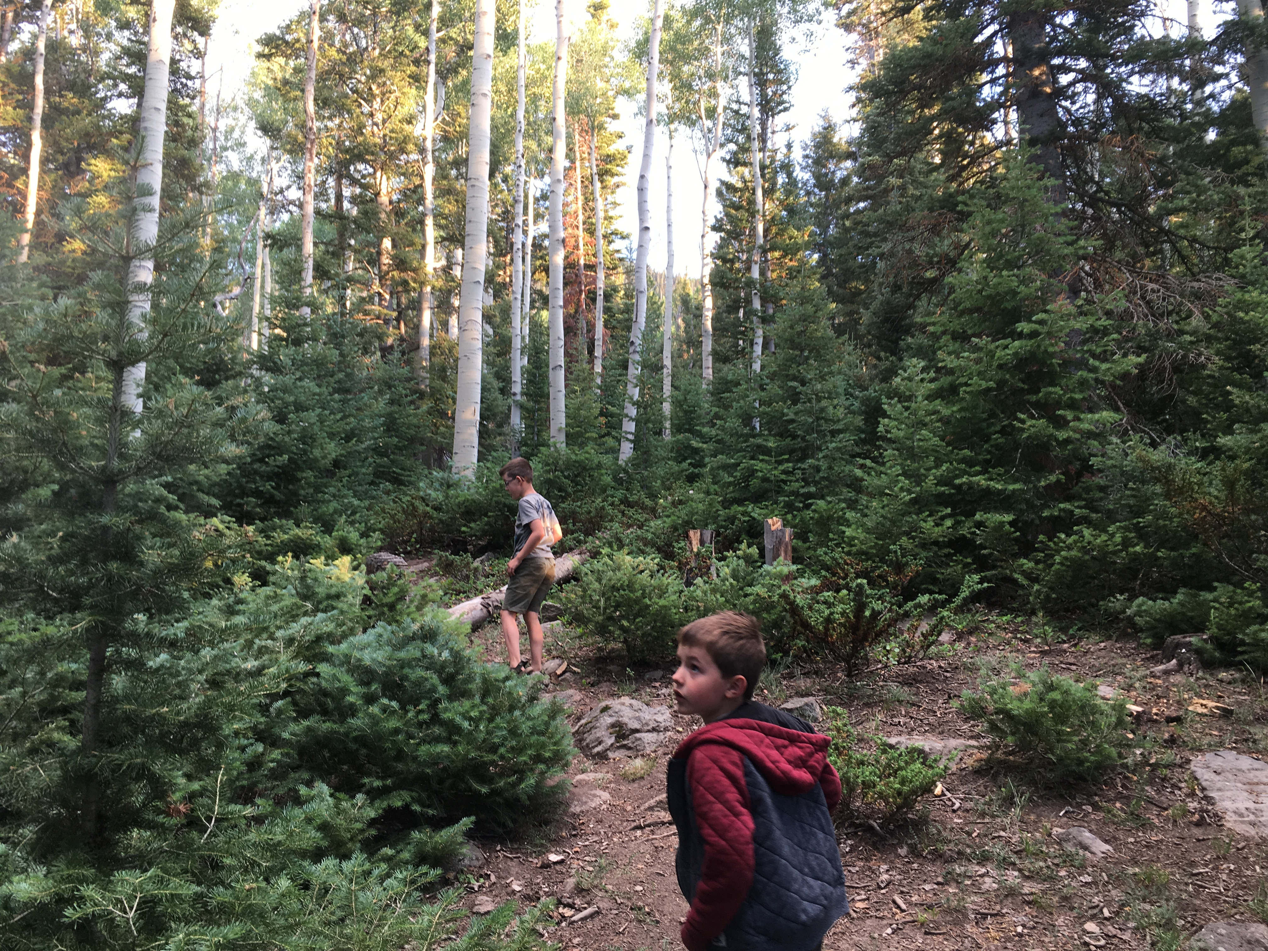 Explore high altitude fun at tushar lakeside campground st george hunter reina top and conor reina explore the forest surrounding the tushar lakeside campground beaver utah july 15 2017 photo by hollie reina publicscrutiny Image collections