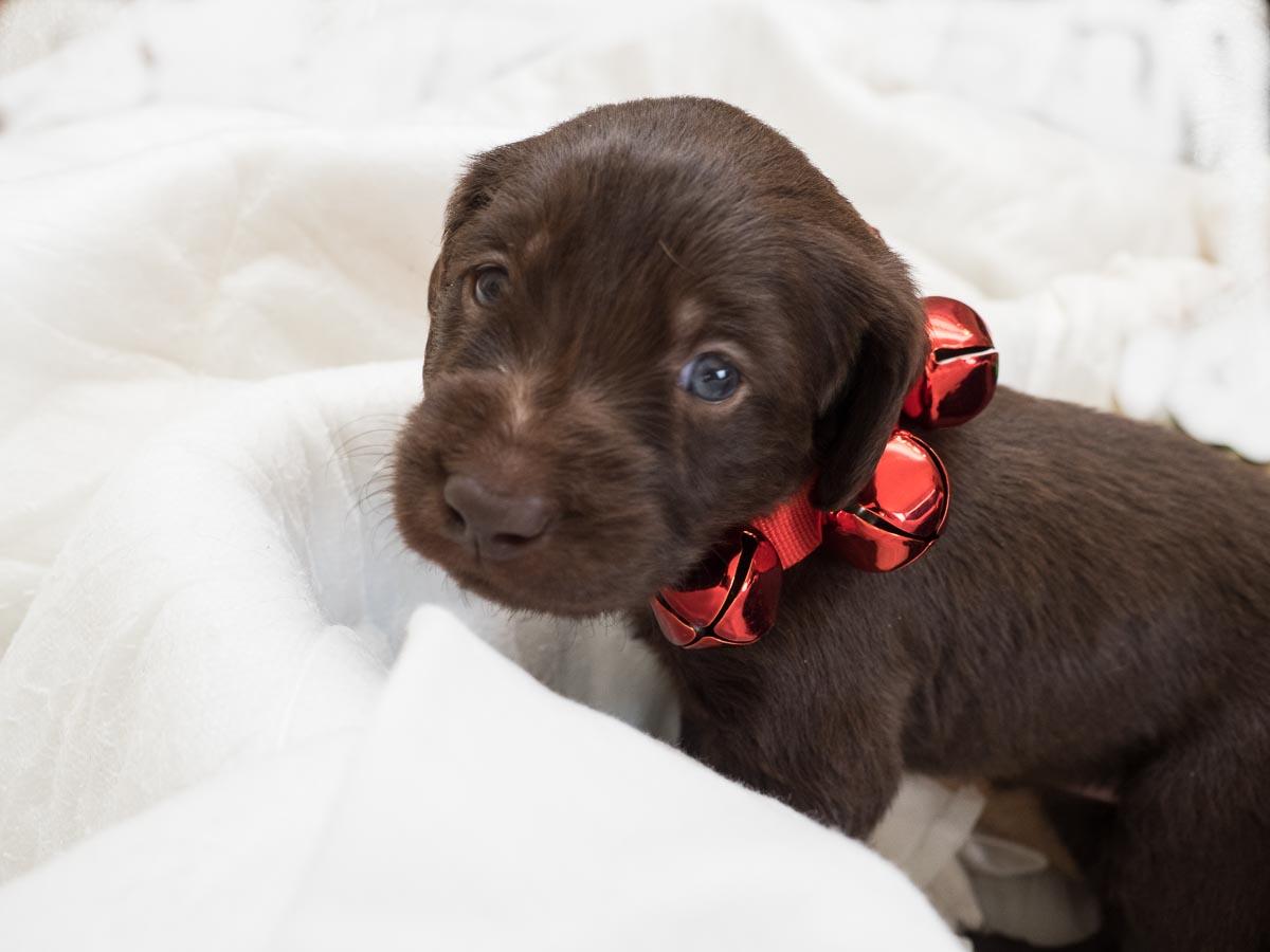 Dog Grooming Hurricane Utah