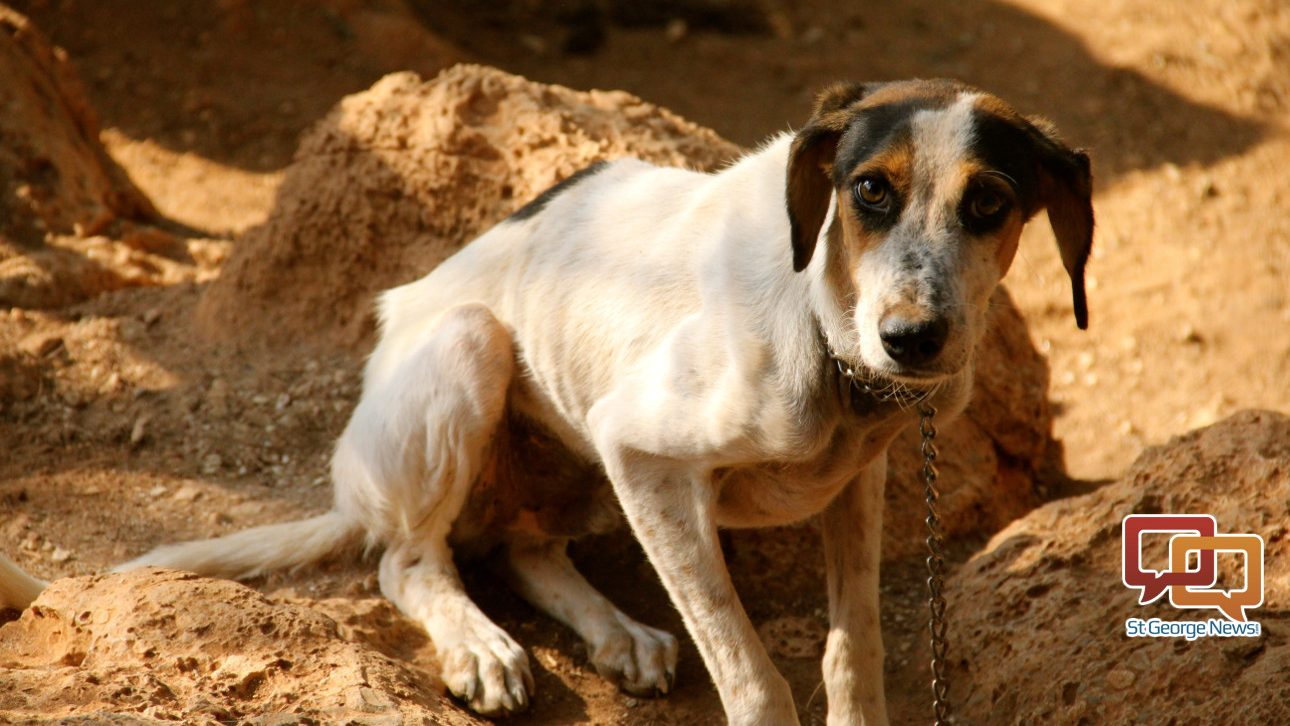 Pet owners would face punishment for not providing animals