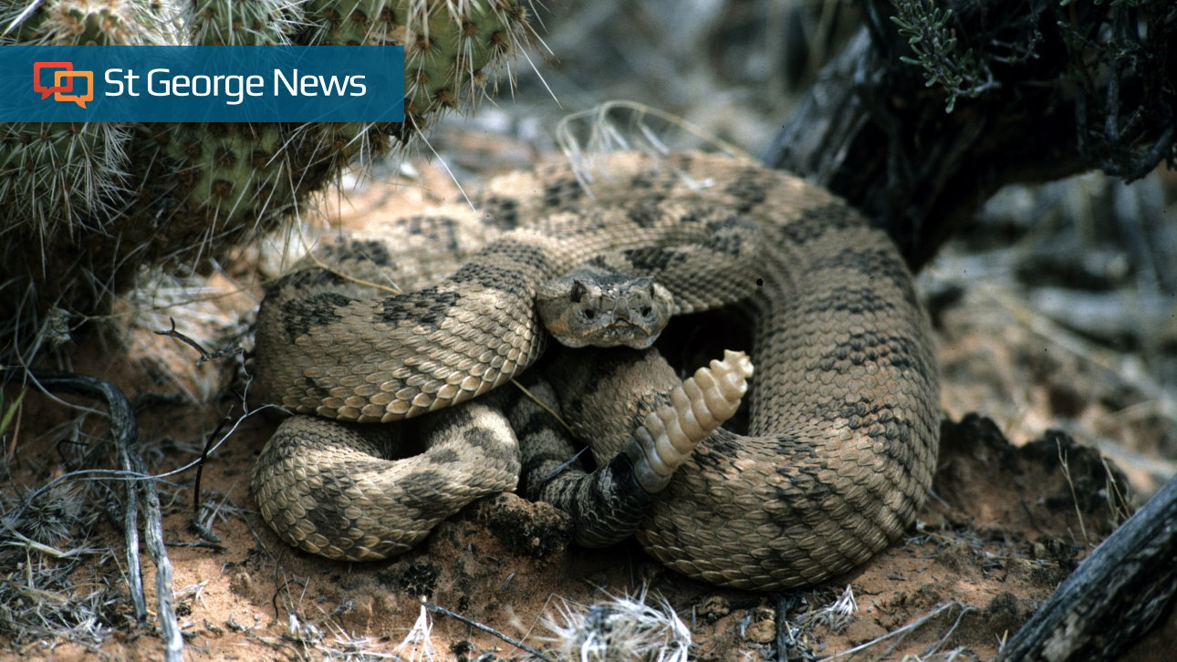 Keep yourself and your dog safe from rattlesnakes – St George News