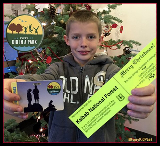 Kaibab National Forest To Offer Christmas Tree Tags Firewood