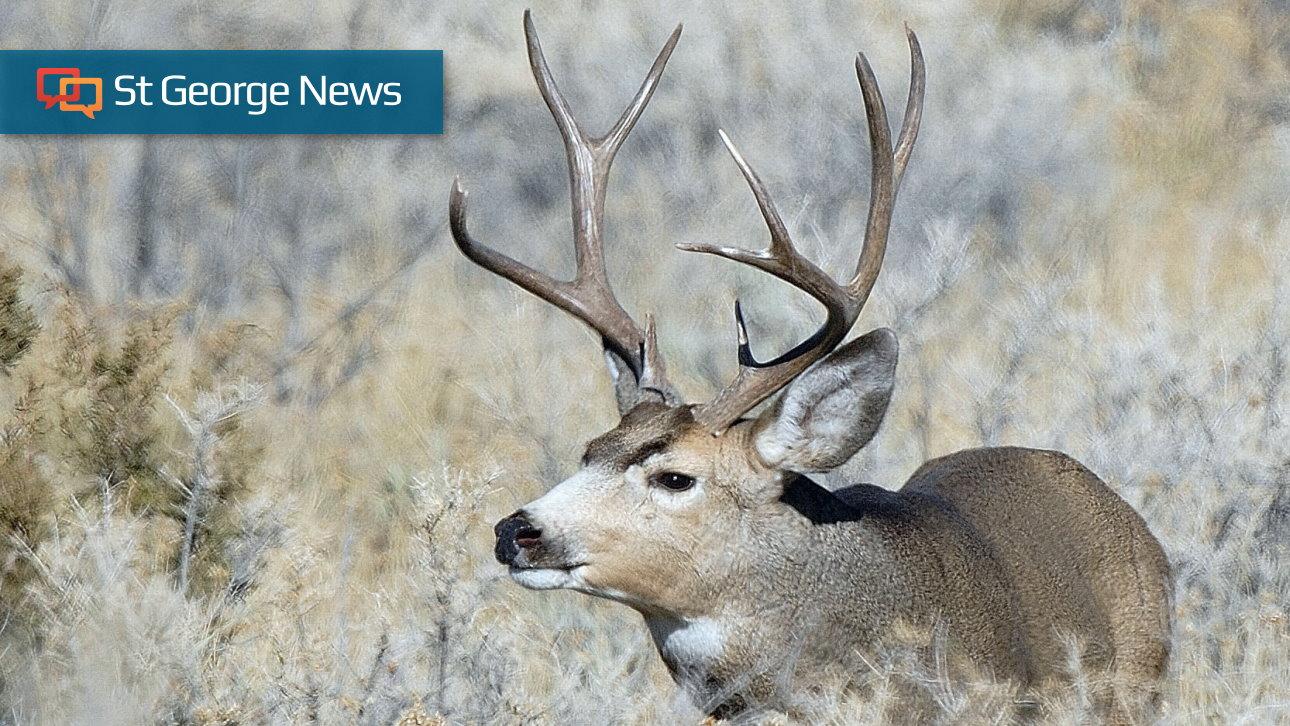 Utah DWR announces last chance to get permits for deer, elk