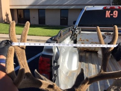 3 men facing charges after allegedly poaching trophy deer in