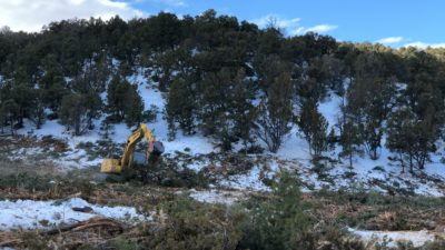 Can You Cut Your Own Christmas Tree In Utah 2020 DWR mulching thousands of trees to ensure sustainability of native