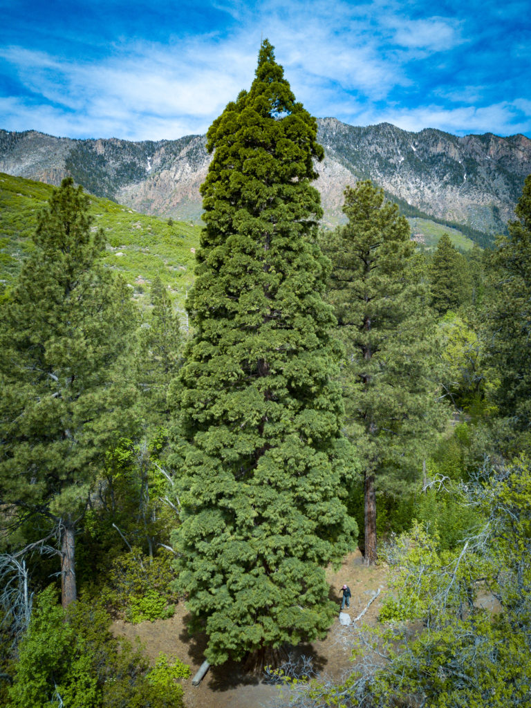 Browse day; Pine Valley's Giant Sequoia and abandoned ...